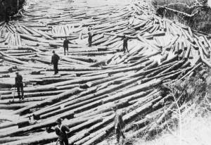 draveurs bois rivière