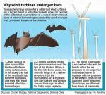 éolienne chauve-souris mortalité tue